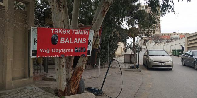 Yasər Dadaşbəyli
